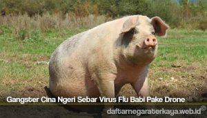 Gangster Cina Ngeri Sebar Virus Flu Babi Pake Drone